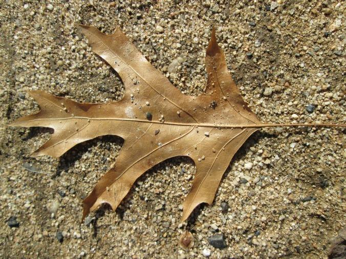 leaf-315762_1280