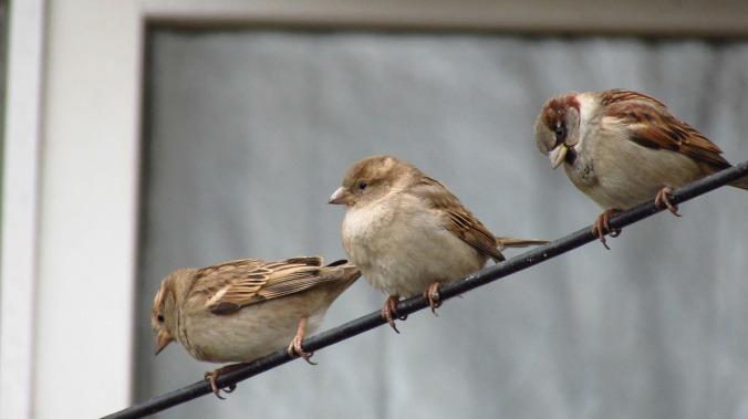 birds-3094022_1920