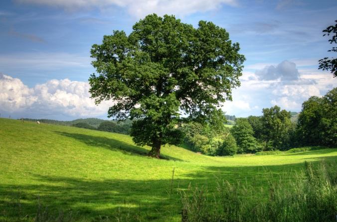 tree-oak-landscape-view-53435