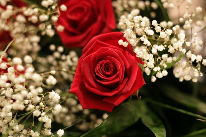 roses-1169371-1279x852