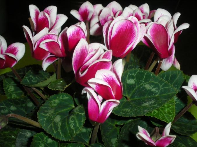 flowers-79507_1920